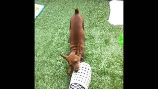 元気を持て余す愛犬と遊んでみた。