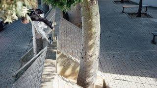 5be9bb01dfd Vans Belgium in Lisbon - The Lives (Jonathan Vlerick, Yeelen Moens,  Jonathan Thijs