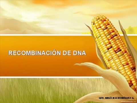 RECOMBINACIÓN DE DNA