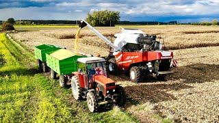 Żniwa kukurydziane 2019 | Rostselmash NOVA 330 | TEST wydajności i spalania | Capello | kukurydza