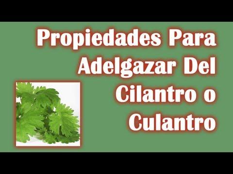 Semilla de cilantro sirve para bajar de peso