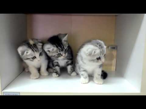 Anak Kucing Lucu Banget Funnycat Tv