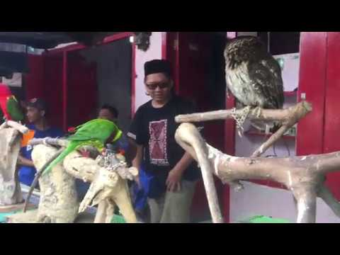 Song birds are sold illegally in wildlife markets