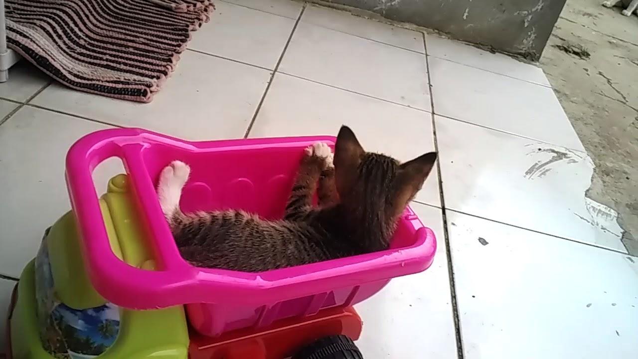 Unduh 94+  Gambar Kucing Naik Mobil Imut HD
