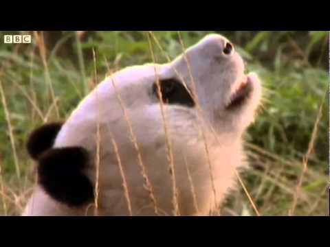Немного из жизни диких животных (3 видео)
