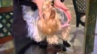 Как правильно выбрать обувь для собаки