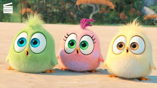 The Angry Birds 2: Wittle Sisters (HD CLIP)