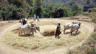 CULTURE of  Hazara (Village Bandi Chamiali Abbottabad)