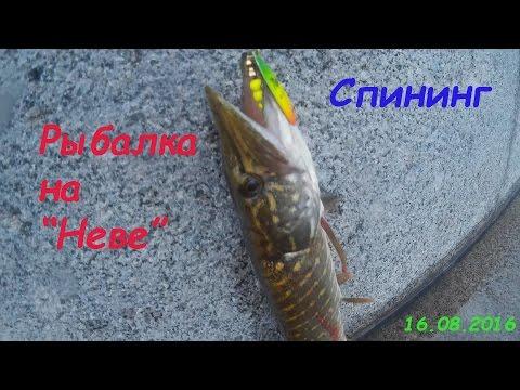 """Рыбалка на """"Неве"""" . Спининг. 16.08.2016"""