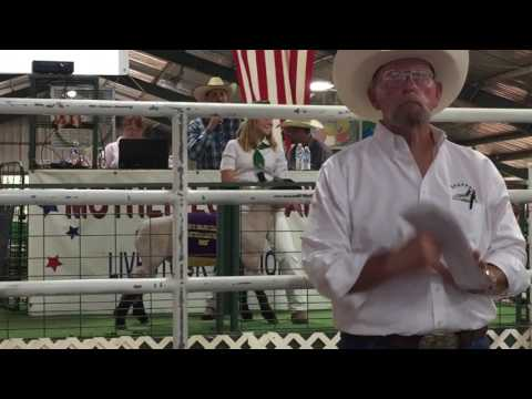 2017 Mother Lode Fair Livestock Auction