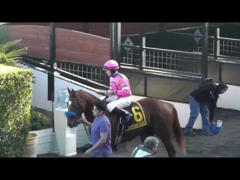 2013 Gold Rush Stakes at Golden Gate Fields