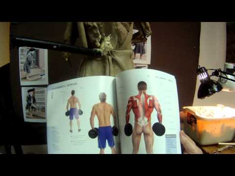 Anatomy Of Muscle Building - A Great Anatomy Book For Artists