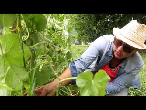 Urban farm forges garden oasis in Virginia Beach neighborhood