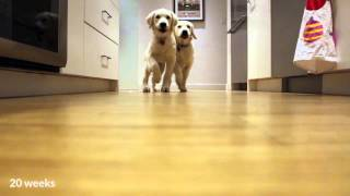 Pups Running For Dinner, Timelapse Style