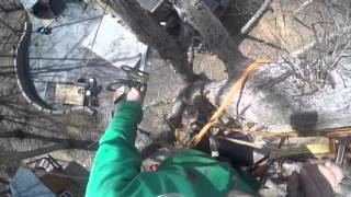 Arborist tree rigging, climbing on unicender with wraptor