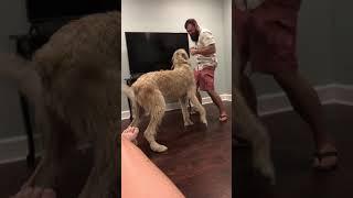 Irish wolfhound and my hunk husband
