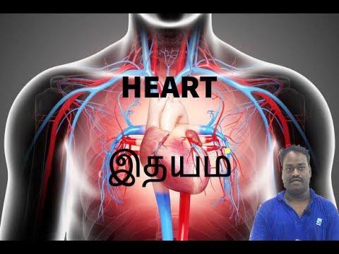 OSCAR-HEART/ இதயம்-ITHAYAM
