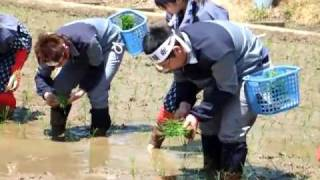 竹駒神社の田植え Planting rice festival in Japan thumbnail