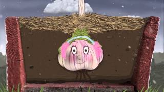 How To Grow An Organic Vegetable Garden: Episode 5 Garlic