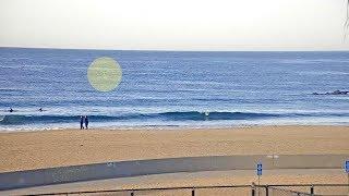 Watch: Shark Breach in Venice Beach