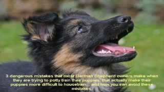 How To Train A German Shepherd Puppy Not To Bite Guide