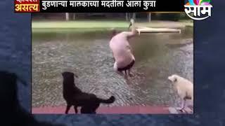 #ViralSatya :: बुडणाऱ्या मालकाच्या मदतीला आला कुत्रा