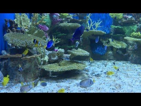 AquaRio, el acuario más grande de Sudamérica