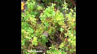 ayurvedic medicinal plants in kerala