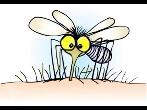 Vòng đời của muỗi & cách muỗi hút máu