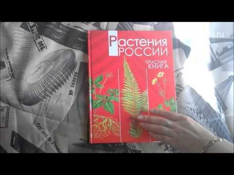 Животные Красной книги