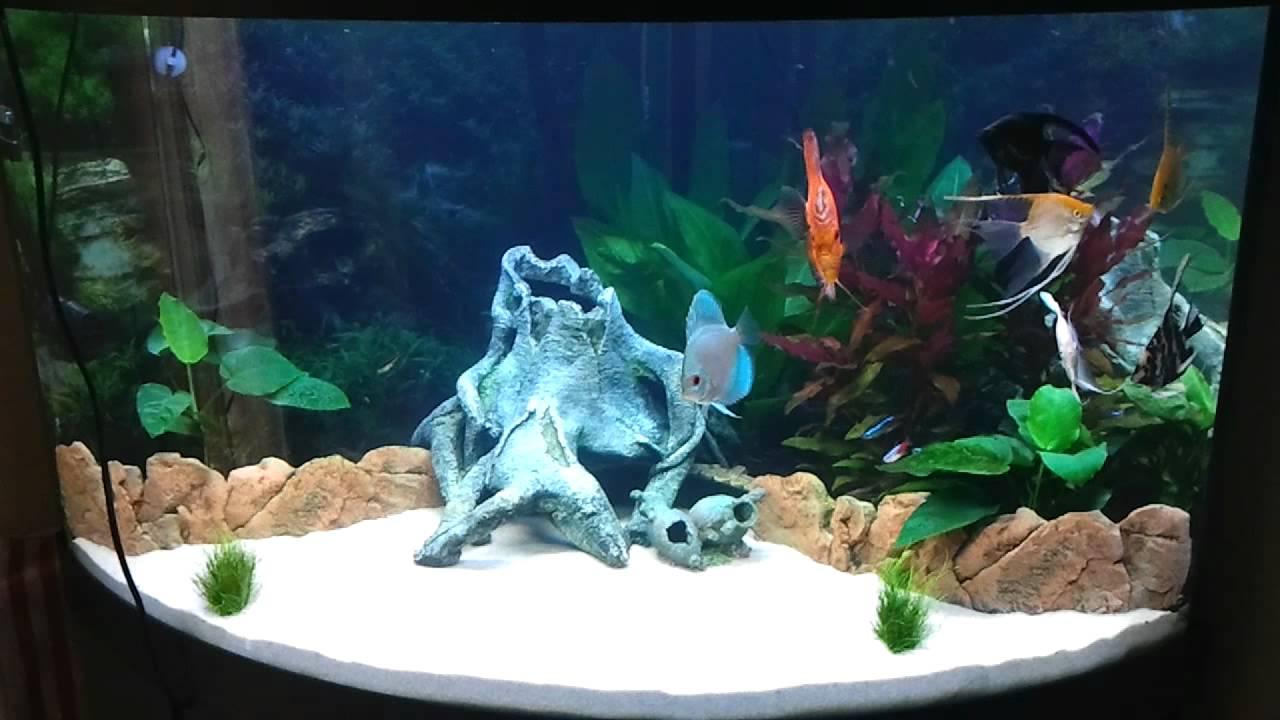 Juwel Trigon 190 Fish Tank Aquarium angelfish+discus - YouTube