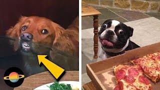 10 psów żarłoków, którym trudno odmówić