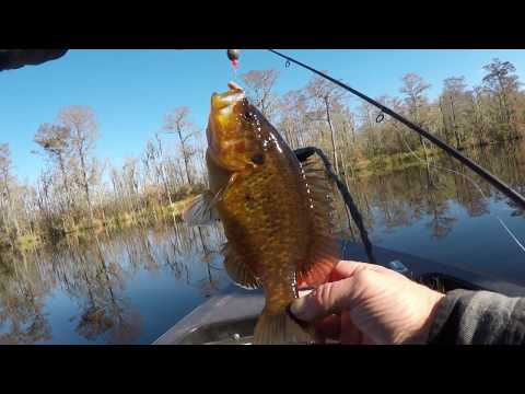 Catching Winter Warmouth,bluegill,and Redear Sunfish.
