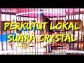 Masteranperkutut Pancingan Perkutut Lokal Suara Crystal  Mp3 - Mp4 Download