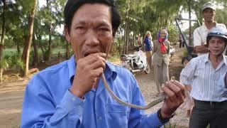 Dị nhân ăn rắn sống