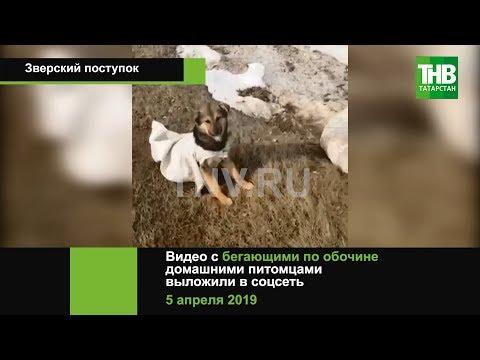 Живые собаки в мешках на обочине - прокуратура Татарстана расследует | ТНВ