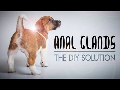 How To Express Your Dog's Anal Glands At Home | DIY Anal Gland Expression