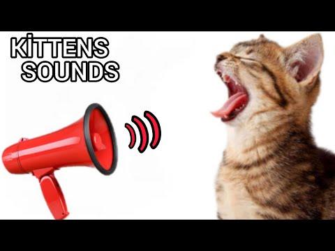 Kitten Meows Sound Effect. Black Screen. Newborn Cat Calling Mom.   (GUARANTEED)