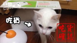 【豆漿 - SoybeanMilk】要怎麼確認一隻喵是不是吃貨呢 很簡單....