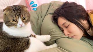 疲れてお昼寝するママVS遊んで欲しい猫