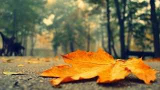Autumn In My Heart! ( Instrumental )
