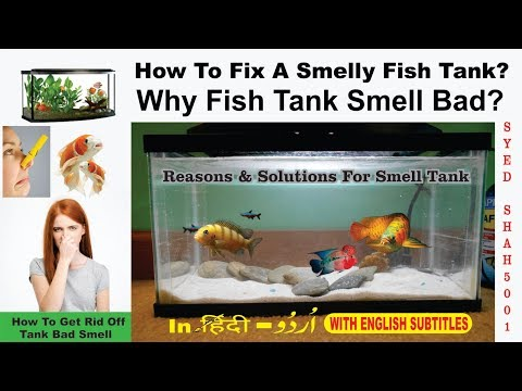 Why Fish Tank Smell Bad? # How To Fix A Smelly Fish Tank #Fishtanksmell