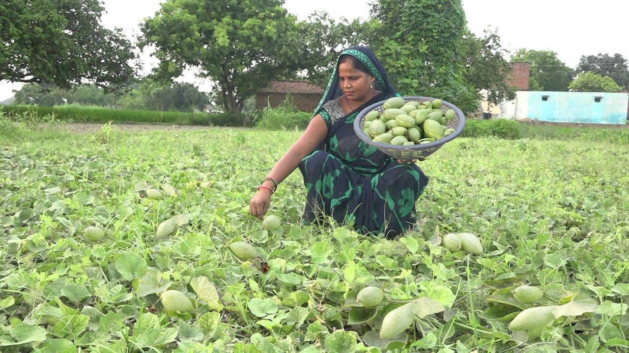 रोटी चावल के साथ आलू परवल की मसालेदार सब्जी बनाये तो पूरा परिवार मांग मांग कर खाएगे parwal ki sabzi