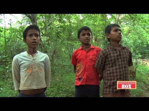 Song by Vedda Boys (Dambana, Mahiyangana)