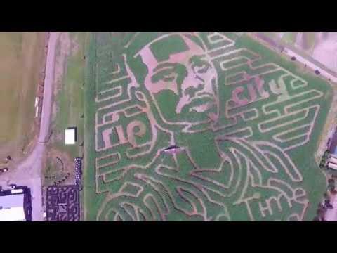 Bella Organic Farm Corn Maze
