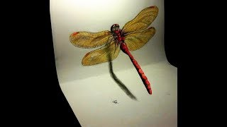 Drawing a 3d dragonfly - How to draw a dragonfly