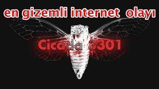 Cicade 3301 İnternet Tarihinin En Gizemli Ve Korkunç Olayı
