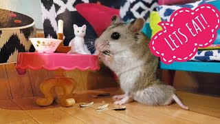 Cute Hamster Eating in His Hamster Hamansion [cute hamster vid]