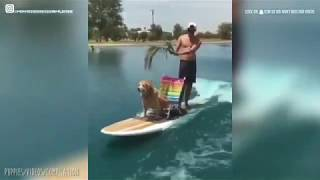 Funny and cute animals, cats, dog video 2020.