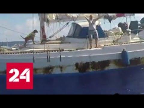 ВМС США спасли двух женщин и двух собак, дрейфовавших 5 месяцев на яхте в океане - Россия 24